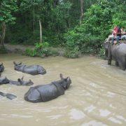 Chitwan 14