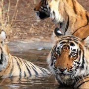 chitwan-safari-b